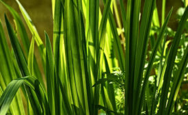 GreenTechnologies-100560492.jpg