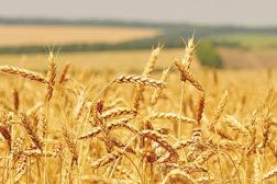 pci0712-BYK-111963713-crops-422.jpg