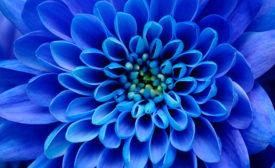 Color Spotlight: Why So Blue?