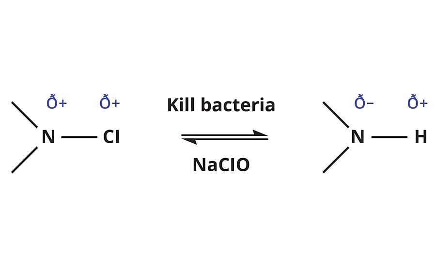 Reaction scheme for N-halamine interaction with bacteria and sodium hypochlorite