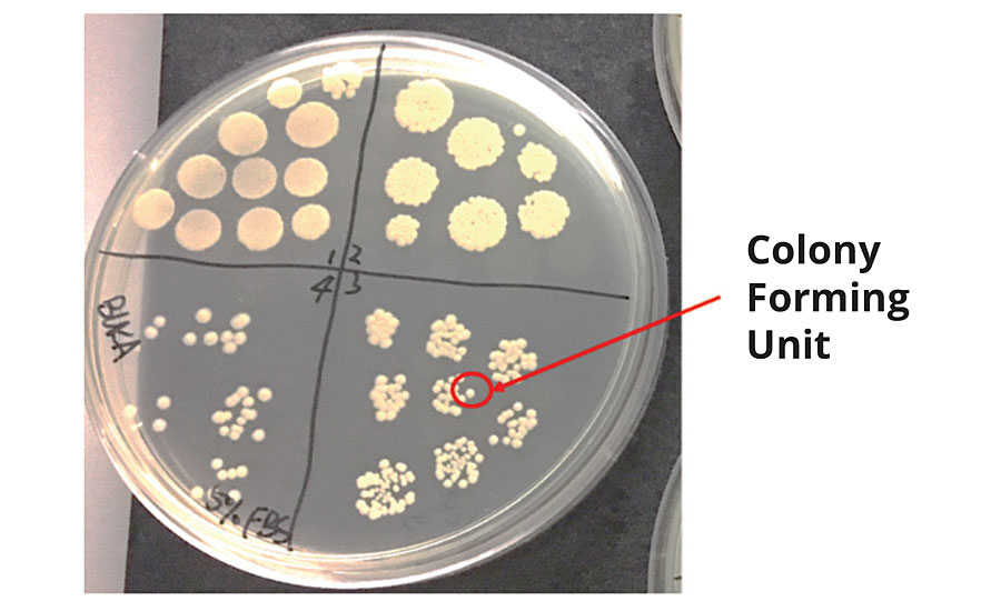 Control agar plate describing colony forming unit