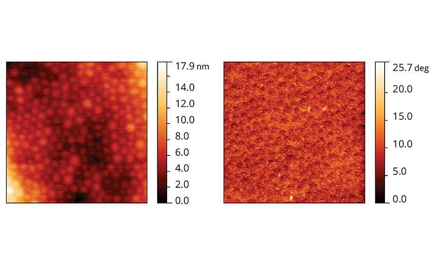 Topographic and phase images of acrylic latex film containing Coalescent D.