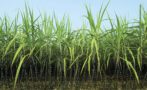 Novel Sugar-Based Neutralizing Agent for Ecolabel-Certified Paints