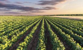 soy beans in coatings