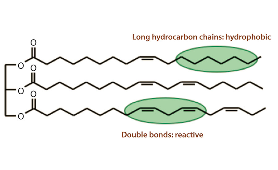 Soybean oil's long hydrocarbon chains and double bonds.